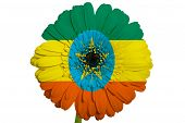 Gerbera Daisy Flower In Colors National Flag Of Ethiopia   On White Background As Concept And Symbol
