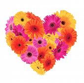 Постер, плакат: Символ сердце из Гербера цветет