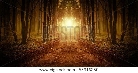 Symmetrical image of a road with light at the end in a forest with fog in autumn