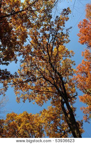 Blue sky and autumn leaves changing red to yellow