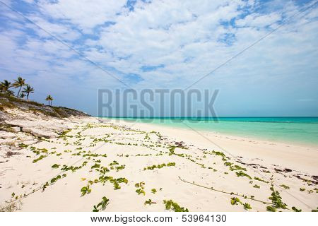 Beautiful beach at Providenciales on Turks and Caicos islands