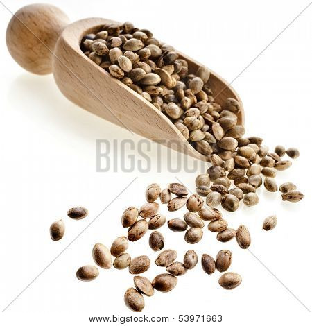 Cannabis Hemp seeds in wooden scoop  isolated on white background