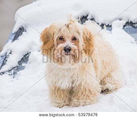portrait of cute dog in snow
