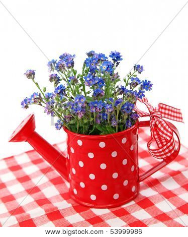 Forget-me-not flowers in red  watering-can