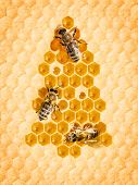 Christmas tree frome honey cells with three bees