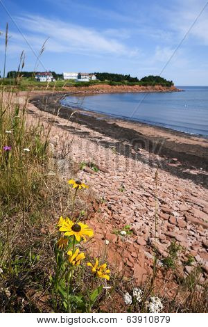 Wildflowers and red rocks on Prince Edward Island coast near village of North Rustico in Green Gables Shore, PEI, Canada.