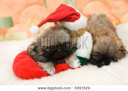 Puppy In A Santa Hat