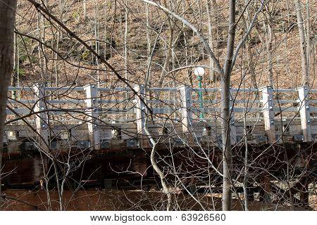 Bridge amongst tree branches