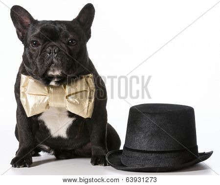 french bulldog dressed up in bowtie sitting beside top hat