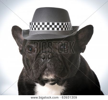 french bulldog wearing fedora hat