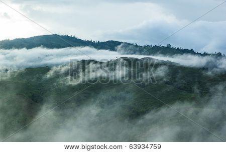 Forest On Morning Mist
