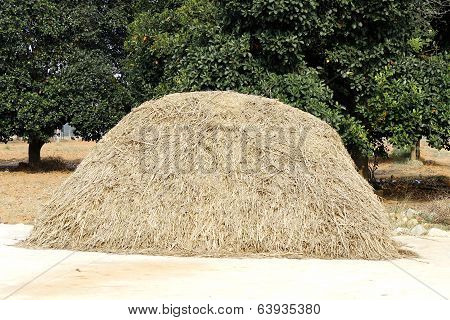 a pile of hay stacked which will be used as fodder for cattle in the farm