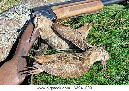 Hunting Trophies - Woodcocks Closeup