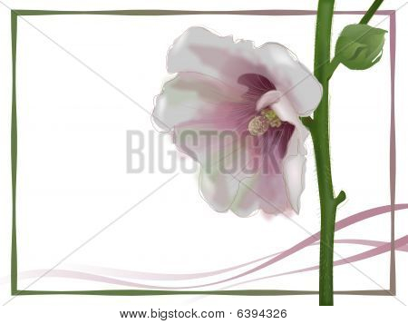 Hollyhock flower with pink ribbons and green border notecard