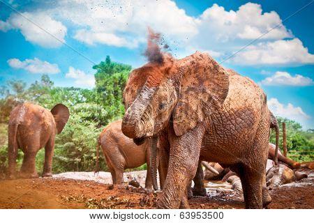 Herd of elephants enjoying the mud in Kenya. Afrika.