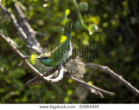 Beautiful Green Bird At The National Park