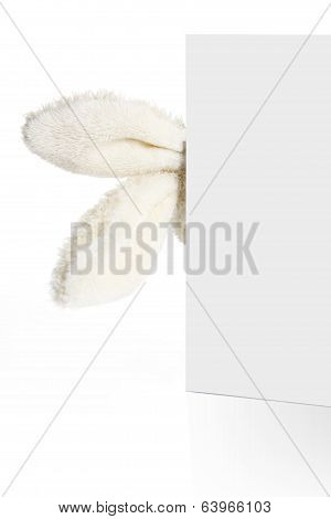 Rabbit Ears Look Out From Behind A White Paper