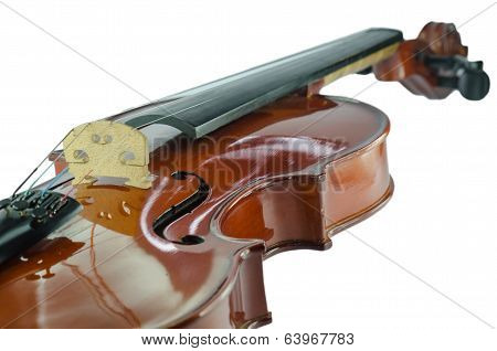 The Violin Bridge Closeup