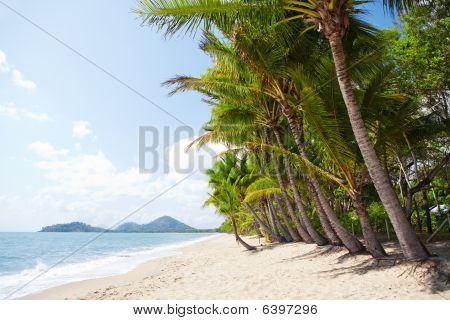 Tropical Beach With Palm Trees In North Queensland