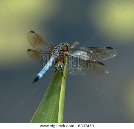 .dragonfly close-up