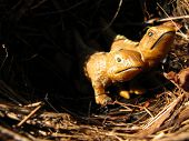 image of tuatara  - Two plastic lizards in a nest - JPG