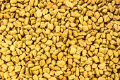 foto of fenugreek  - close up picture of fenugreek seeds being dried in sun light - JPG