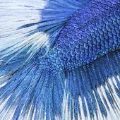 image of fish skin  - Close up on a fish skin  - JPG
