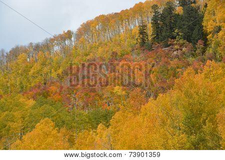 Many Shades of Fall