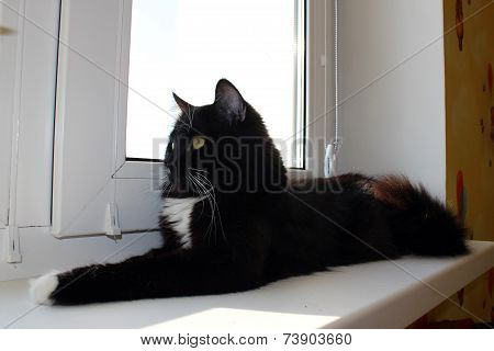 Cat Lying On The Window-sill