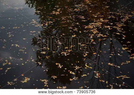Motley Autumn Leaves On Black Water