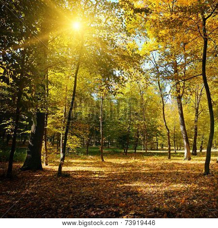 Rays of sun in autumn park