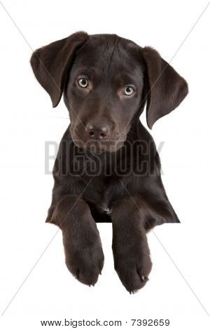 Puppy Above Banner