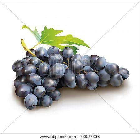 Ripe grape on white  background. Vector eps 10.