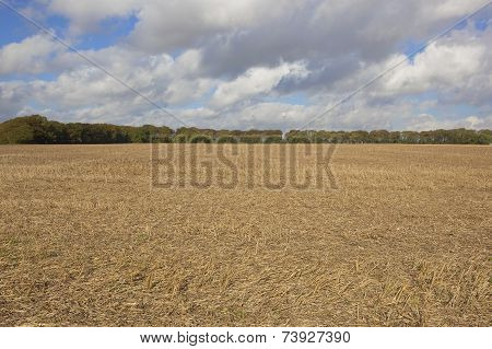 Autumn Stubble Field