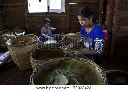 Making Burmese Cigars