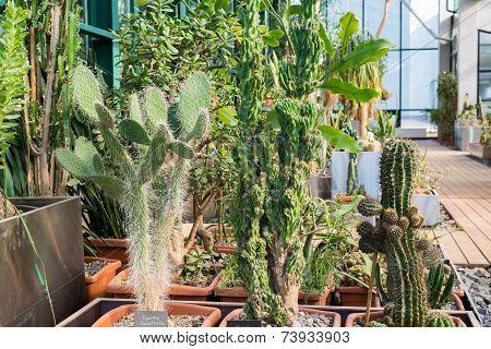 Lots Of Cacti Growing In Pots