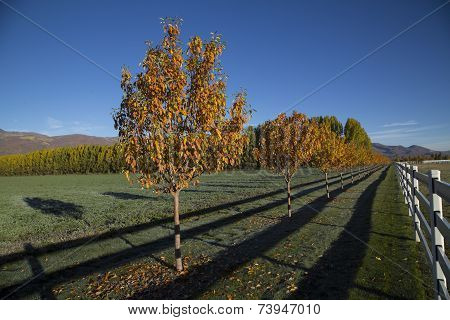 Cold Fall Mourning Mountain Valley Alfalfa Field Autumn Trees