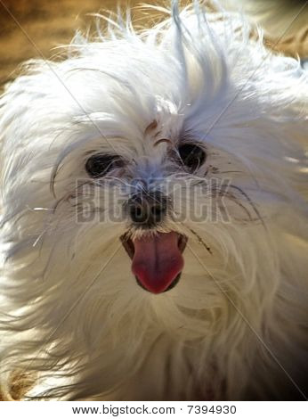 Portrait of a little fluffy dog