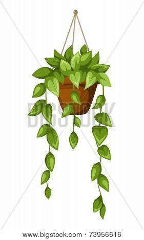 Green houseplant in a pot. Vector illustration.