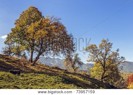 Autumn Landscape With Farm Animals