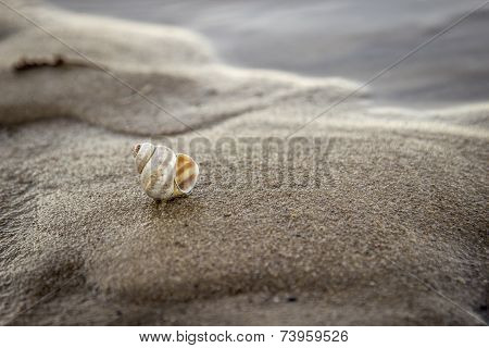 seashell on the beach loneliness