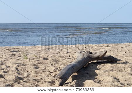 Big Snag On Sand Beach