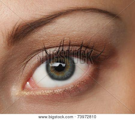 Macro image of human eye. Young Woman.