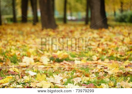 Bright Autumn Leaves On The Ground