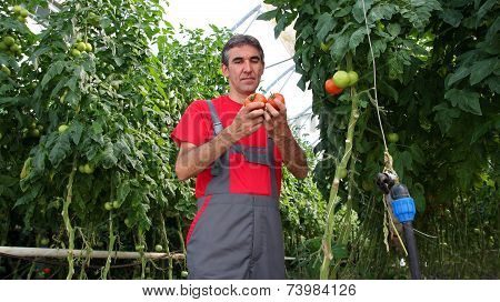 Greenhouse Worker At Work