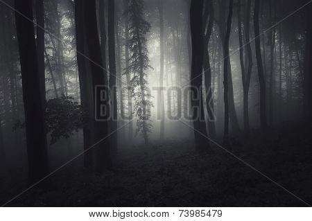 Dark mysterious scary forest at night on Halloween