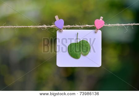 Green leaves on the white card, caring for nature concept