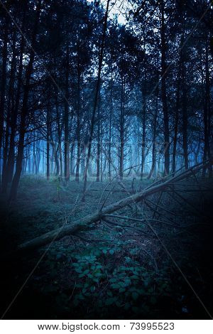 Awesome dark morning - foggy morning on his way to a fallen tree