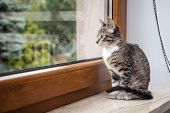 image of puss  - Small grey pet kitten starring out apartment window - JPG