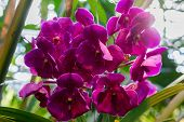 picture of orquidea  - A beautiful orchid in the room interior - JPG